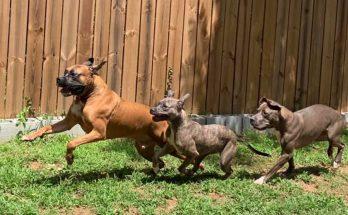 Shampoochies Gwinnett Dogs
